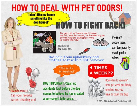 How to remove pet odors from your carpets